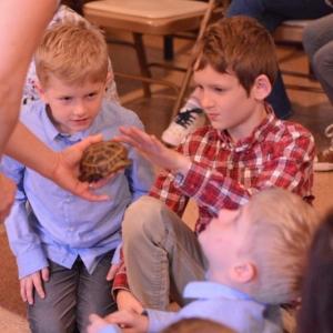 tortoise with boy